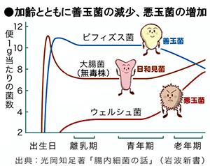 加齢とともに善玉菌の減少、悪玉菌の増加