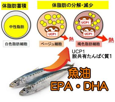 魚油 EPA・DHA