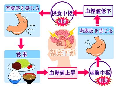 食欲のメカニズム