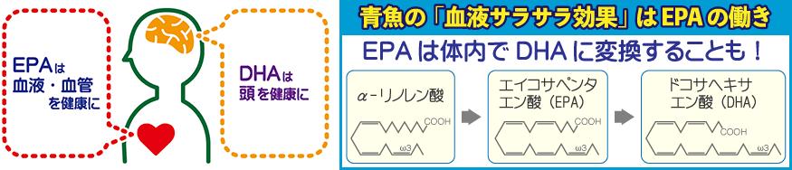 EPA・DHAの働き