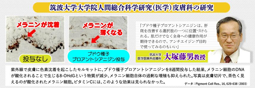 筑波大学大学院人間総合科学研究(医学)皮膚科の研究