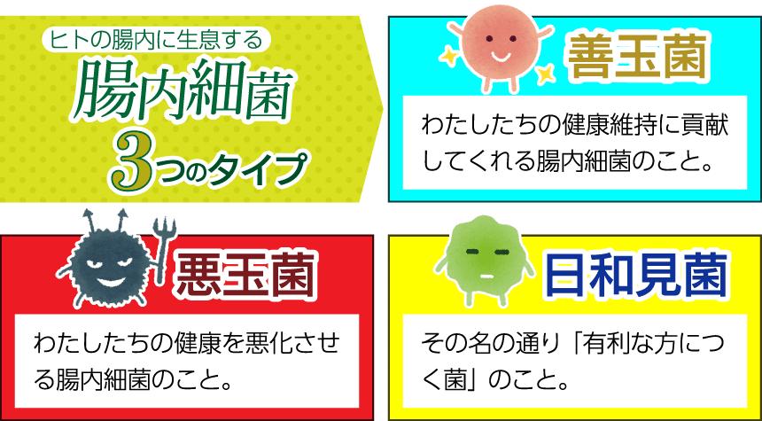 腸内細菌の種類